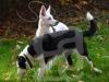hund014