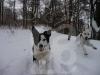 hund016
