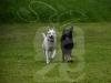 hund050