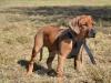 hund051