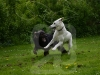 hund052