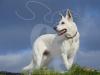 hund054