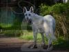 hund056