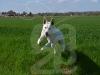 hund061