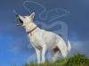 hund064