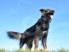 hund065