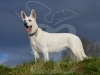 hund066