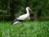 storch002