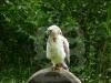 greifvogel001